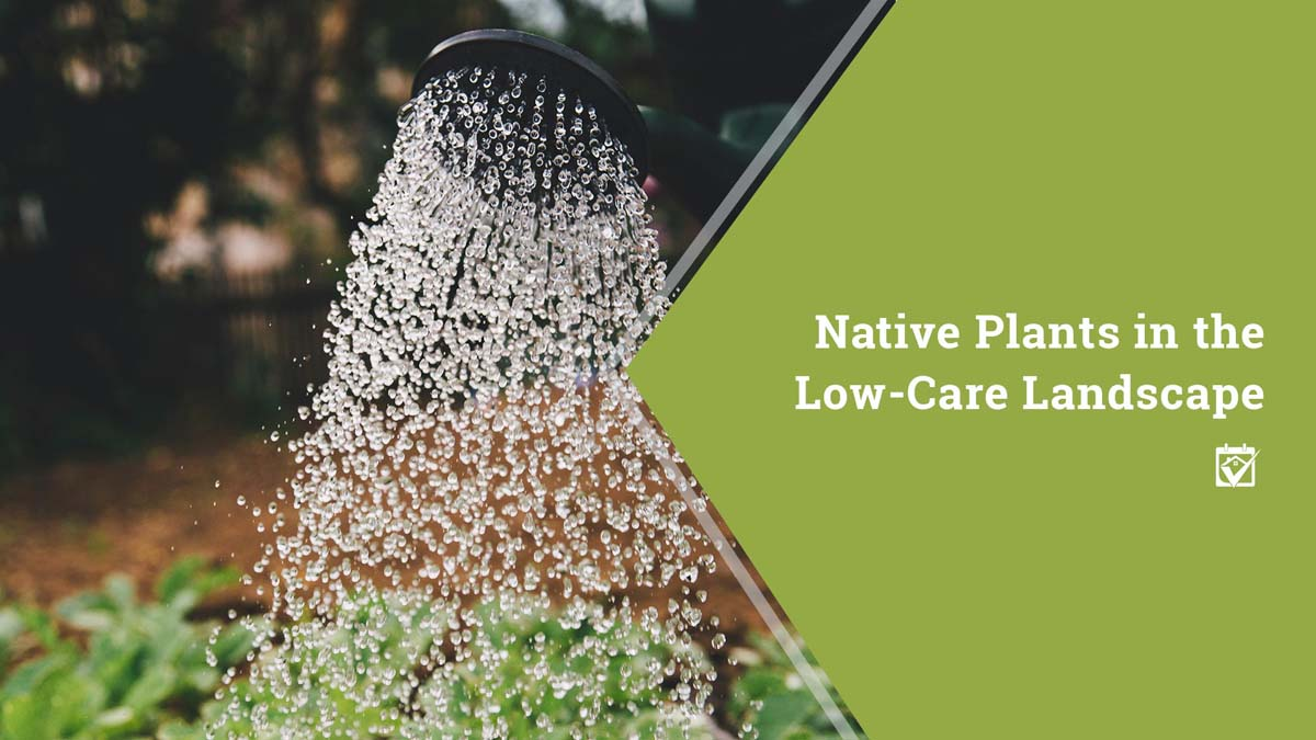 Native Plants in the Low-Care Landscape